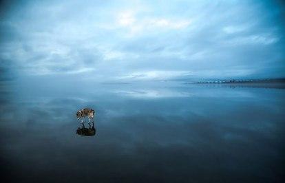 photography-dogs-siberian-husky-frozen-lake-fox-grom-11